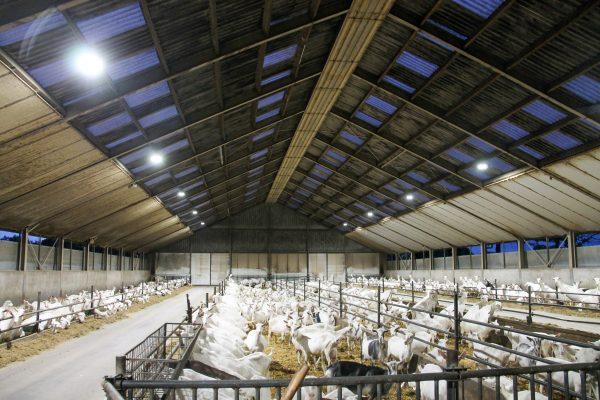 geitenboerderij-led-verlichting