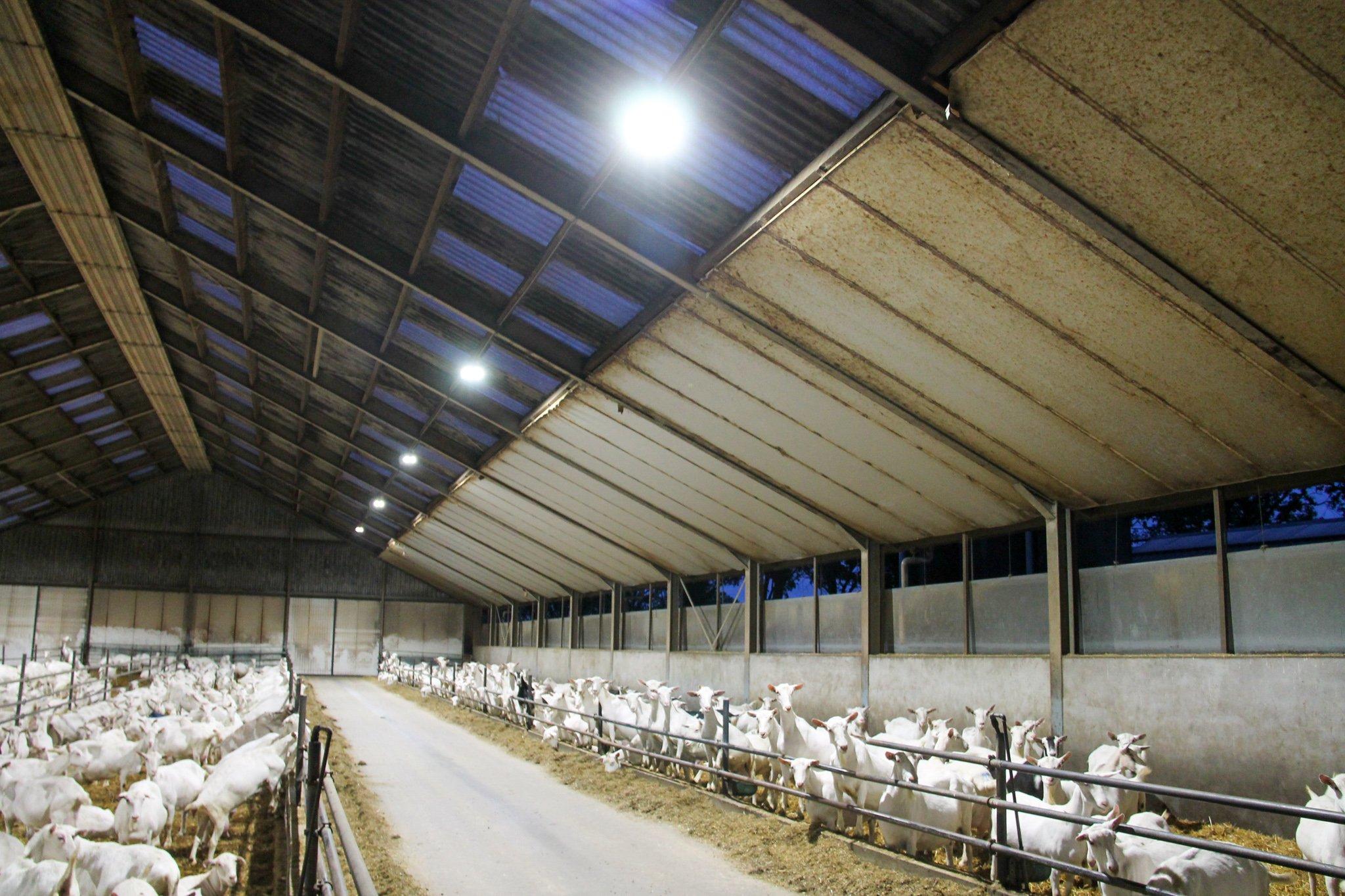 led-verlichting-stal-boerderij