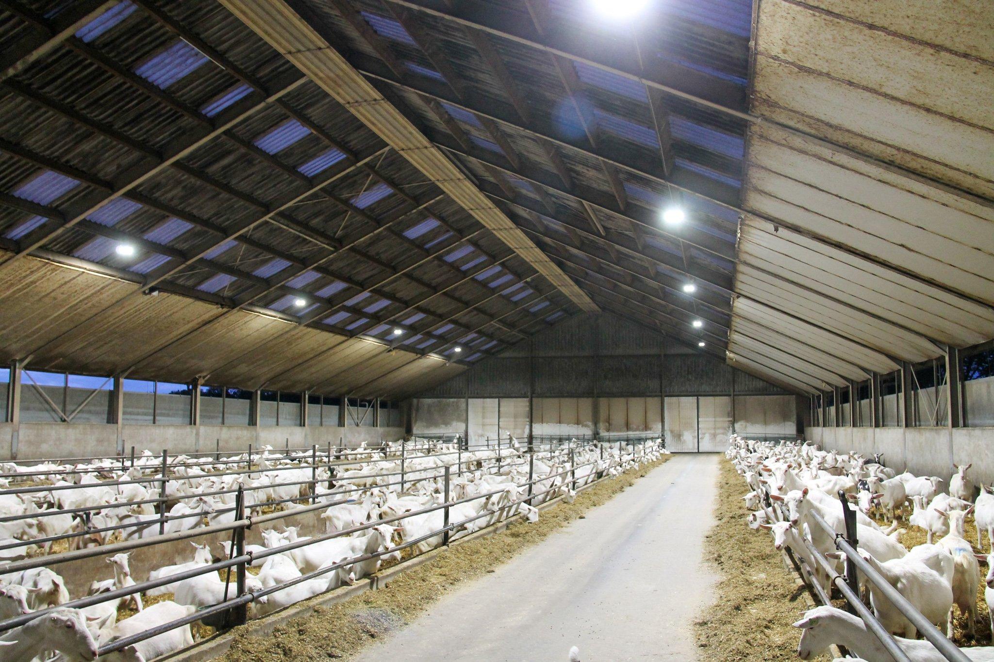 geitenboerderij-landhorst-verlichting